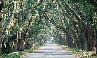 Belfair Avenue of Oaks, SC